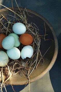 Bowl of fresh eggs <3