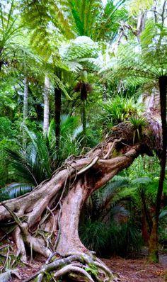 NZ Ferns forest