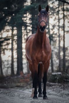 Animals, Street, Natural, Landscape and more. Horse Photos, Horse Pictures, Disney World Rides, Disney World Pictures, Running Horses, Horse Photography, Horse Love, Horse Breeds, Horseback Riding