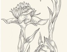 """Check out new work on my @Behance portfolio: """"Sketchbook"""" http://be.net/gallery/43304405/Sketchbook"""