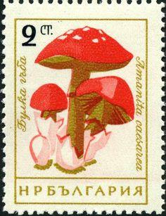 Znaczek: Amanita caesarea (Bułgaria) (Mushrooms (I)) Mi:BG 1263,Sn:BG 1183,Yt:BG 1099