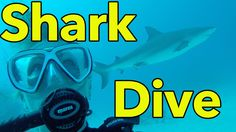 GoPro: Shark Dive with Reef Oasis Dive Club Bahamas