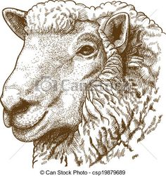 Vector - ngraving head of sheep - stock illustration, royalty free illustrations, stock clip art icon, stock clipart icons, logo, line art, EPS picture, pictures, graphic, graphics, drawing, drawings, vector image, artwork, EPS vector art