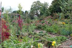 gardening — Silvia Dekker