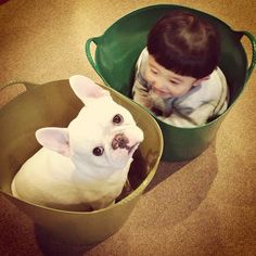 Adorable Friendship between Boy & his French Bulldog