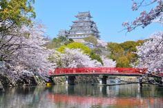 桜の時期到来♡姫路城のお花見ベストスポットをご紹介! - Colors(カラーズ)