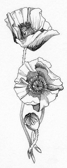 poppies ... signifies a promise of resurrection after death, from Robert Graves: The Greek Myths: | Telescope, Sketches Of Flowers, Watercolor Poppies, Poppies Tattoo, Zentangle Patterns, Tattoos Gallery, Flower Tattoos, Art Nouveau, Poppy