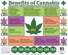 'Cannabinoids' and Their Positive Effects on the Body - Jollity Magazine