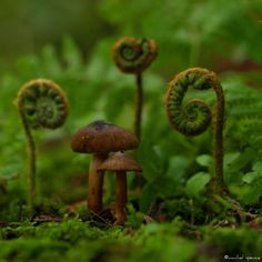 "So magical, reminds me of my fave ""Alice in Wonderland"". Mushrooms And Ferns - Photograph of Woodland Fungi & Ferns In The Forest."