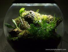 White Orchid BiOrbAir Terrarium Trial (part five) - Pumpkin Beth Indoor Ferns, Indoor Plants, White Orchids, White Flowers, Star Wars Decor, Bottle Garden, House Plants, Beautiful Homes, Pumpkin