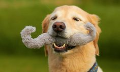 """New Kong """"Mustache"""" toy...funny!"""