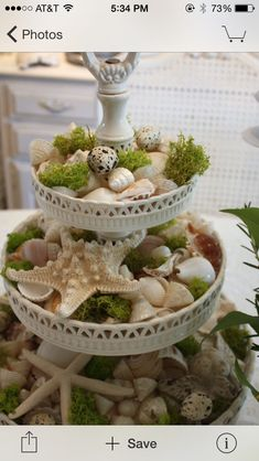 Shells on plate stand