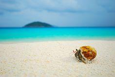 Hermit crab on similan beach by Sakkarin Kamutsri, via 500px