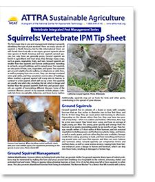 Problems with squirrels? ATTRA's new tipsheet will hopefully help you control them! Also available in Spanish. #ATTRA #squirrelcontrol #IPM
