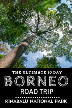 The Ultimate 10 Day Borneo Road Trip: Kinabalu National Park
