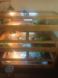 Post pictures of your Russian Tortoise enclosure! Tortoise House, Tortoise Food, Tortoise Habitat, Tortoise Table, Turtle Habitat, Reptiles, Red Footed Tortoise, Tortoise Enclosure, Russian Tortoise