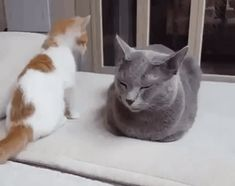 Attacking a Cat Loaf