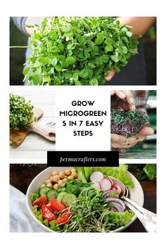 Learn how to grow your own microgreens in 7 easy steps to get nutrient-rich greens in your home year-round. #rawfood