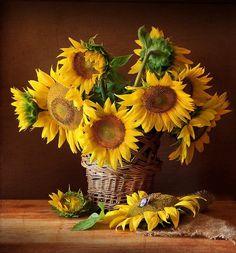Amigos,    Encontrei essas lindas fotografias em vários sites da internet, quando pesquisava por imagens de uma das flores que mais gosto, o...