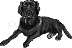 Stock vector of 'color sketch of the serious dog breed black labrador retrievers lies isolated on the white background'