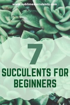 We have compiled a list of succulents that are both pleasing to the eye, and easy on beginners. Succulent Planter Diy, Succulent Care, Succulent Arrangements, Flowering Succulents, Cacti And Succulents, Cactus Plants, Succulent Species, Plant Nursery, Exotic Plants