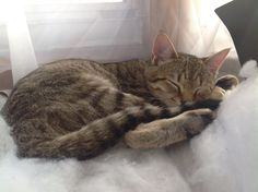 Kittens look like angels when they are sleeping.  This is one of the cat world's many tricks to make humans obey them.