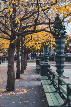 Autumn Scenes, Stockholm, Sidewalk, Landscape, Park, Outdoor Decor, Scenery, Side Walkway, Walkway