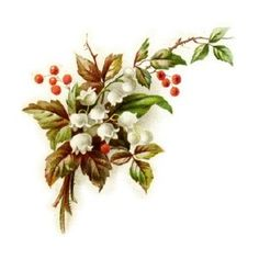 Antique Clipart: Lily of the Valley with Holly. - Polyvore