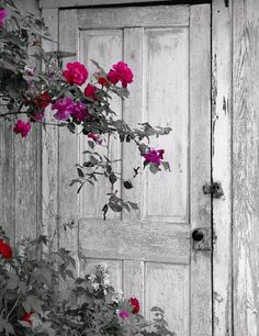 White washed weathered wood door and colorful flowers