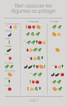 Combine vegetables well in the vegetable garden 7 Potager Bio, Potager Garden, Garden Planters, Garden Art, Pallet Planters, Container Gardening, Gardening Tips, Vegetable Garden Design, Garden Types