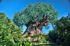 Tree of Life at Animal Kingdom- words cannot even express how gorgeous this tree is in person!