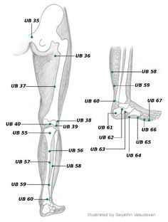 Urinary Bladder Meridian - Lower Extremity