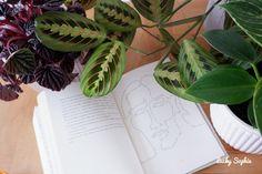 #Romans #bookaddict #livre #lecture #ados #lafleurperdueduchamandek #aventure #amitie #andes #amazonie Le Vent Se Leve, Album Jeunesse, Lectures, Romans, Plant Leaves, Adventure, Children, Neurology, Novels