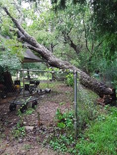Hurricane Images, Back Home, Arch, Outdoor Structures, Garden, Plants, Longbow, Garten, Lawn And Garden