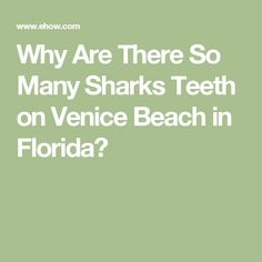 Why Are There So Many Sharks Teeth on Venice Beach in Florida?