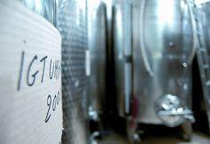 vino montefalco cantine