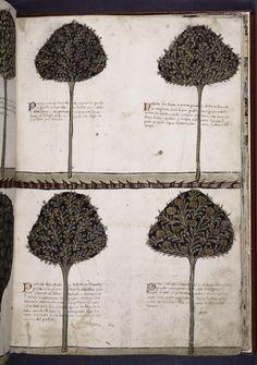 Tacuinum Sanitatis, Four Trees, c. 1460. (A medieval handbook on health and well being.)    Calendar, Tables for art of computus, Computus, Quadrans, De Sphaera, Algorismus, Cautelae