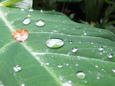 Alternative Eden Exotic Garden: Escape in the Jungle at Singapore Botanic Gardens