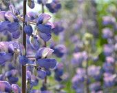 Digital Photo of Violet Flowers Digital, Flowers, Summer, Plants, Etsy, Summer Time, Plant, Royal Icing Flowers, Flower