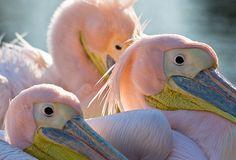 born pink #nastygal #minkpink