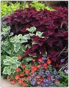 Mixed foliage container tips for color combinations and keeping the plants looking their best - Heat tolerant plants keeping gardens alive ...