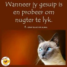 Witty Quotes Humor, Funny Quotes, Afrikaanse Quotes, Good Morning Quotes, Haha, Language, Jokes, Sayings, Beetles