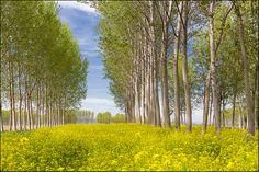 Tra i pioppi by beppeverge, via Flickr