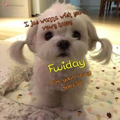 Good Morning Images, Friday, Happy, Dogs, Animals, Gud Morning Images, Animales, Animaux, Pet Dogs