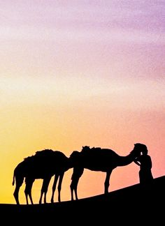 On the bucket list: ride a camel. Travel to Dubai and check it off your list with an excursion through the desert at dawn, followed by a day of sightseeing around the city to learn more about the Islamic and nomadic culture.