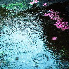 Water ripples with rain drops I Love Rain, Make It Rain, Rainy Night, Rainy Days, Smell Of Rain, Rain Photography, Singing In The Rain, Summer Rain, When It Rains