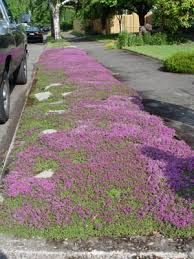 Image result for stepable grass