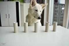    Hundekind Abby   Das Leben eines Hundes mit Schilddrüsenunterfunktion - So beschäftigt ihr euren Hund sinnvoll mit der Nase