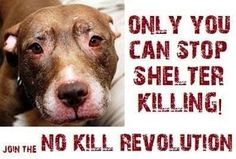 Don't shop for the average pet, adopt and save a life!