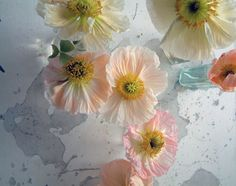single icelandic poppies...the colors are to die for...and the square, blue-tint vases!